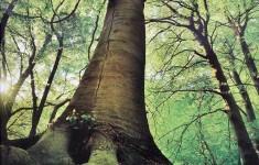 bělský les p