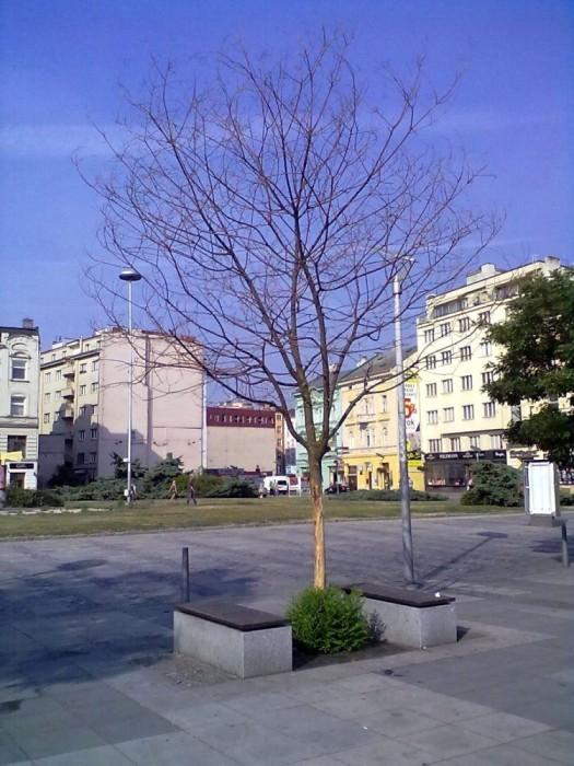 strom masarykac centrum gorkeho